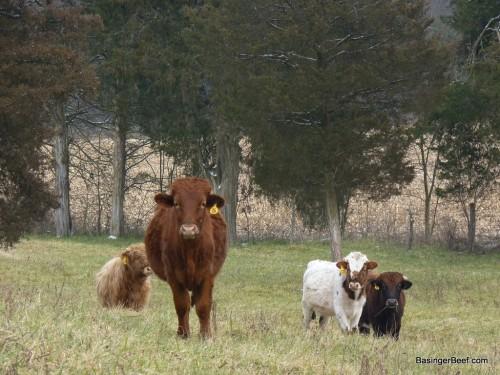 Basinger beef 017sm