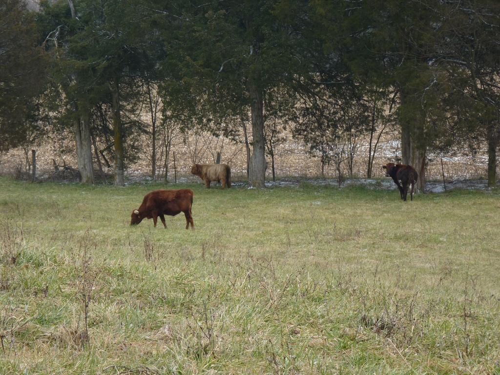 Basinger beef 010