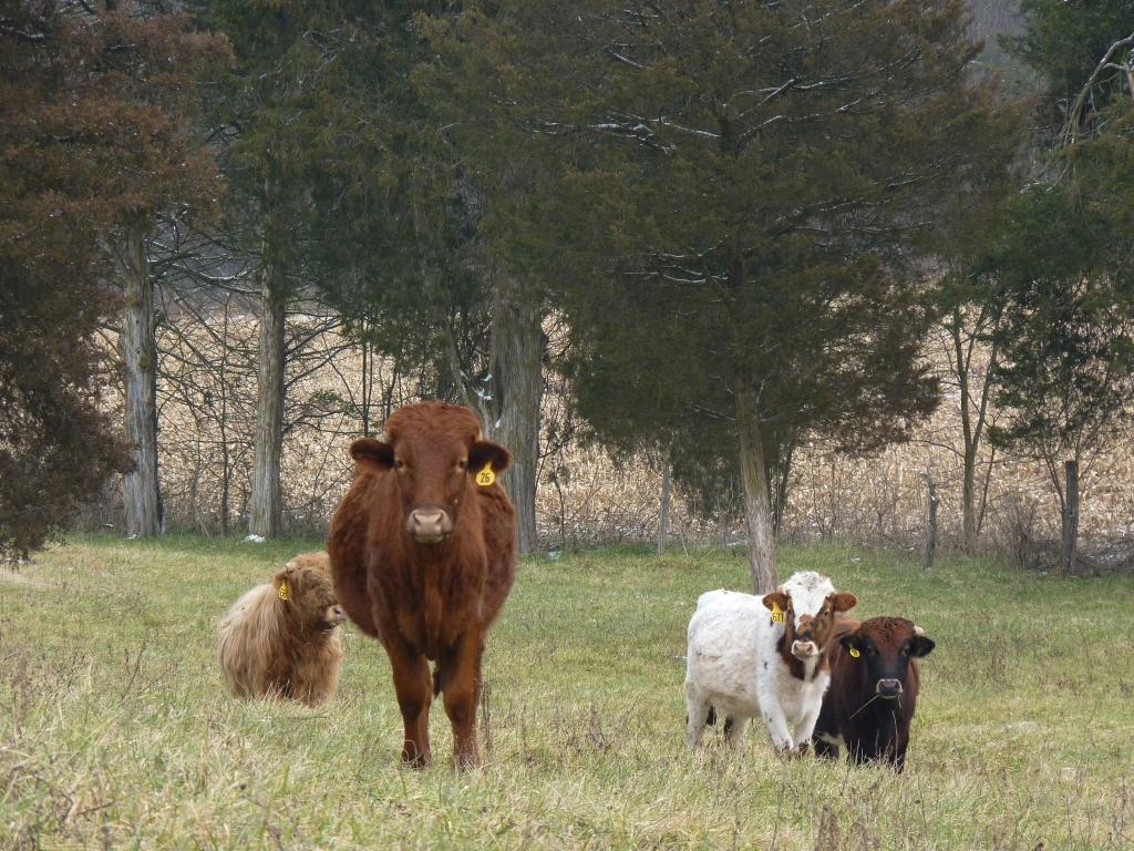Basinger beef 017