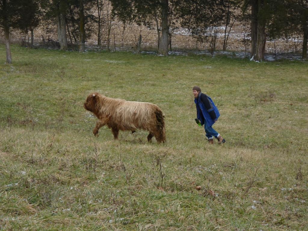Basinger beef 034