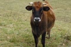 Basinger beef 011