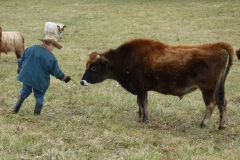 Basinger beef 033